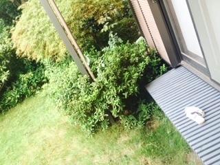 庭の縁側.jpg